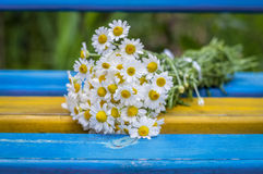 Beautiful Daisies on the bench outdoor, background Royalty Free Stock Images