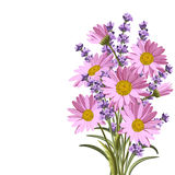 Beautiful daisies and lavender flowers. On white background Royalty Free Stock Photography