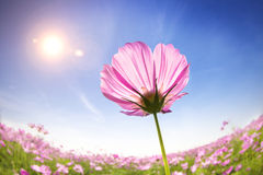 Beautiful daisies on the sunlight background Royalty Free Stock Photos