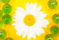 Beautiful Daisy Flower on Water Royalty Free Stock Photos