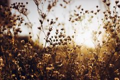 Beautiful daisy flowers blooming in evening sunlight in summer t. Ime in grassland. wildflowers in countryside sunset. amazing warm photo, atmospheric moment stock images