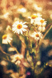 Beautiful daisy flowers in meadow by sunset, illustration with c. Beautiful daisy flowers in meadow by sunset. Seasonal natural scene. Photo filter. Illustration Stock Photography