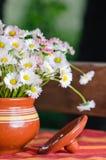 Beautiful daisy flowers in pot Royalty Free Stock Photos