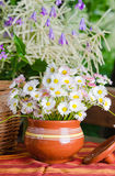 Beautiful daisy flowers. Summer background Royalty Free Stock Images