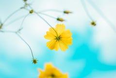 Beautiful daisy gerbera flowers Stock Photography