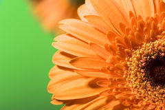 Beautiful daisy petals Royalty Free Stock Photos