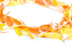 Beautiful daisy petals Royalty Free Stock Photos