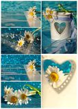 Beautiful daisy in white heart Stock Images