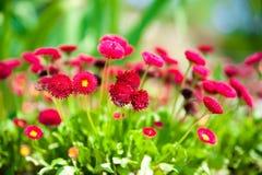 Beautiful daisys Stock Photos