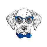 Beautiful dalmatian painted by hand. Vector illustration for a card or poster, print on clothes. Cute dog in glasses and tie. Pedi royalty free illustration