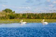 Beautiful Danube Delta Royalty Free Stock Photography