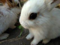 Beautiful dark eyes of rabbit stock photography