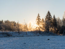 Beautiful dark sunrise over forest in winter Stock Photography