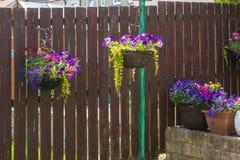 Beautiful, dark violet petunia in hanging basket, home garden. Beautiful, dark violet petunia in hanging basket, on wooden fence in home garden Stock Images