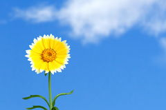 A beautiful day Royalty Free Stock Photo