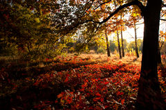 Beautiful day in the autumn forest with sun. Beautiful trees of an autumn forest in a park. Ukraine stock photo
