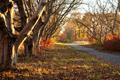 Beautiful day in the autumn forest with sun. Beautiful trees of an autumn forest in a park. Ukraine stock photos