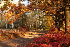 Beautiful day in the autumn forest with sun. Beautiful trees of an autumn forest in a park. Ukraine royalty free stock photos