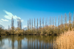 Beautiful day in Brandon Marsh. Brandon Marsh is an SSSI and nature reserve in Warwickshire, England Stock Photo