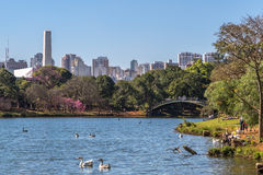 A beautiful day at Ibirapuera park, São Paulo. People of São Paulo, Brasil are enjoying a beautiful day in their city park Royalty Free Stock Photo