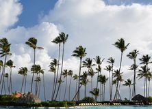 Coconut trees swaying in white clouds Royalty Free Stock Photo