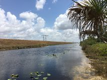 Beautiful day in south Florida Everglades Stock Images