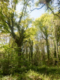 Beautiful day time light in the forest during a hot summer`s day Stock Photography