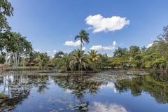 Beautiful day view of palms and lake. Near Criadero de Cocodrilos, Cuba stock photography
