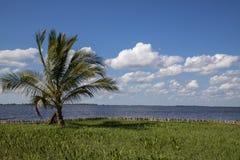 Beautiful day view of water and palm. In Laguna del Tesoro, Cuba stock photo