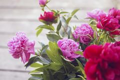 Beautiful flovers pink and green colors royalty free stock photos