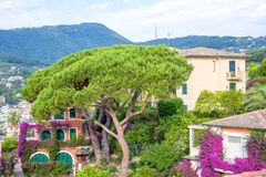 Beautiful daylight view to a green tree and Santa Margherita Lig Stock Image