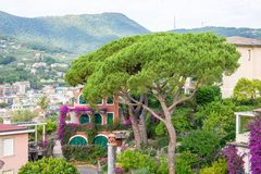 Beautiful daylight view to a green tree and Santa Margherita Ligure city Stock Photography