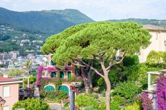 Beautiful daylight view to a green tree and Santa Margherita Ligure city Royalty Free Stock Photography