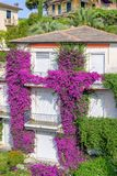 Beautiful daylight view to purple flowers on a house in Santa Margherita Ligure. Beautiful daylight view to purple flowers on a house. Santa Margherita Ligure Stock Photography