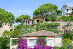 Beautiful daylight view to purple flowers on a house in Santa Margherita Ligure. Beautiful daylight view to purple flowers on a house. Santa Margherita Ligure Stock Image