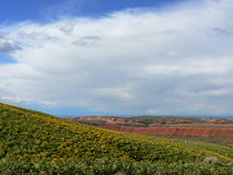 Beautiful Days. Beautiful Spring day with hill covered in yellow flowers with red  hills in background Stock Photos