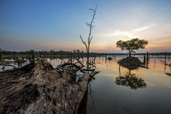 The beautiful dead tree in lake at twilight time Stock Images