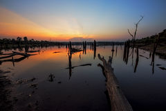 The beautiful dead tree in lake at twilight time Stock Photo