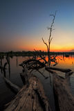 The beautiful dead tree in lake at twilight time Stock Photography