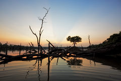 The beautiful dead tree in lake at twilight time Royalty Free Stock Images