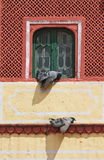 Beautiful Colored Window At Jaipur City Palace Royalty Free Stock Photo