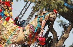Beautiful decorated  dromedary camel at camel fair ,India Stock Photos