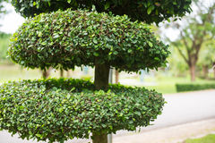 Beautiful decorated tree in park Stock Images