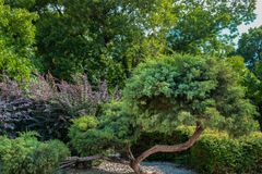 Beautiful decoration and ornamental green tree in nature park royalty free stock photos