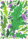 Beautiful decorative border of flowers thistle Royalty Free Stock Photos