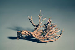 Beautiful decorative branch from a natural tree Stock Images