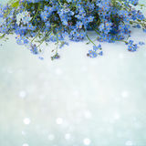 Beautiful decorative floral Card with flowers forget me-not Stock Image