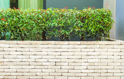 The beautiful decorative plant on the modern wall Stock Images