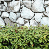 Beautiful decorative plant on the stone wall Stock Photography