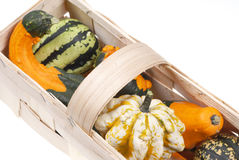 Beautiful decorative pumpkins Royalty Free Stock Photography